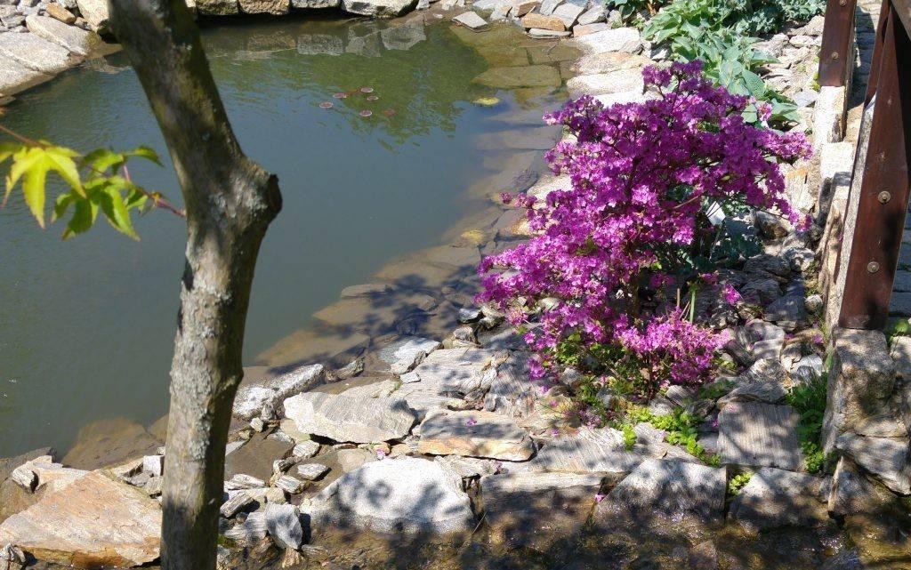Gnejsy – ogród piękny naturalnie