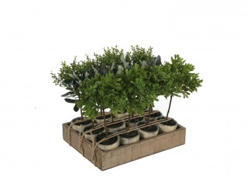 Drzewko oliwne 23cm