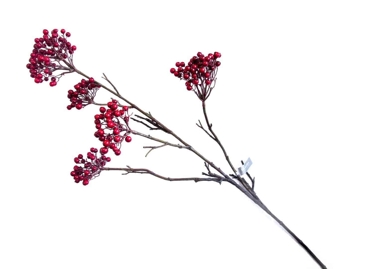 Aronia czerwona 114cm
