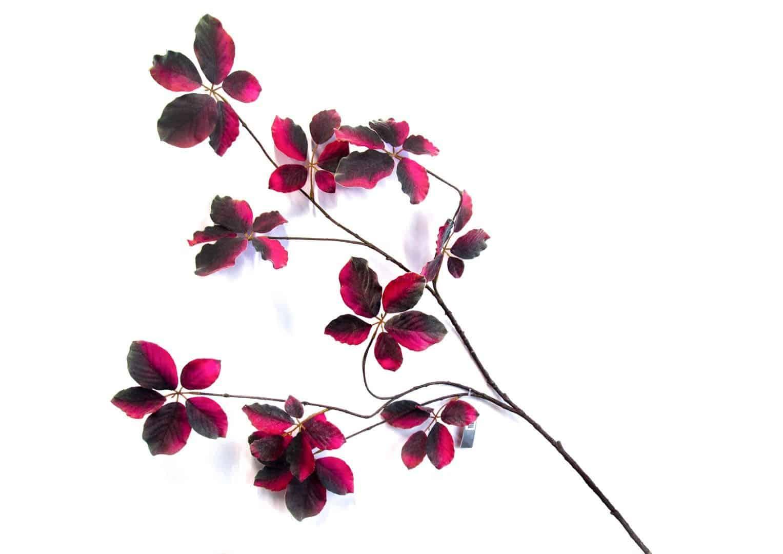 Mulenbekia czerwona 129cm
